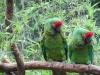 jeudy - éleveur d'oiseau Birdrama