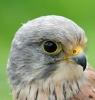 Angeli22 - éleveur d'oiseau Birdrama