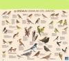 PiouPiou222 - éleveur d'oiseau Birdrama