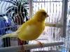 nalette - éleveur d'oiseau Birdrama