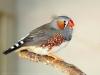 gaga117 - éleveur d'oiseau Birdrama