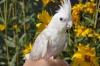 Woodlight - éleveur d'oiseau Birdrama