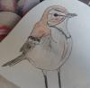 naya26 - éleveur d'oiseau Birdrama
