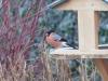 askia85 - éleveur d'oiseau Birdrama