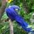 La nature et les oiseaux on les protège.