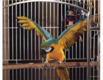 Perroquet Perry the Parrot -  Mâle (Autre)