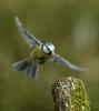 Parc ornithologique : ~ La Vague ~