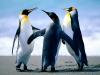 Parc ornithologique : parc paradisiaque