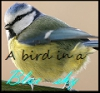 Parc ornithologique : A bird in a blue sky