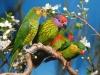 Parc ornithologique : L'Ile aux oiseaux