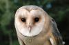 Parc ornithologique : Chez Fantominette