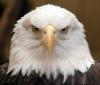 husky1206 - éleveur d'oiseau Birdrama