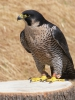 Domea - éleveur d'oiseau Birdrama