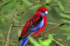 biche3 - éleveur d'oiseau Birdrama