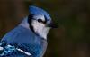 Marie2304 - éleveur d'oiseau Birdrama